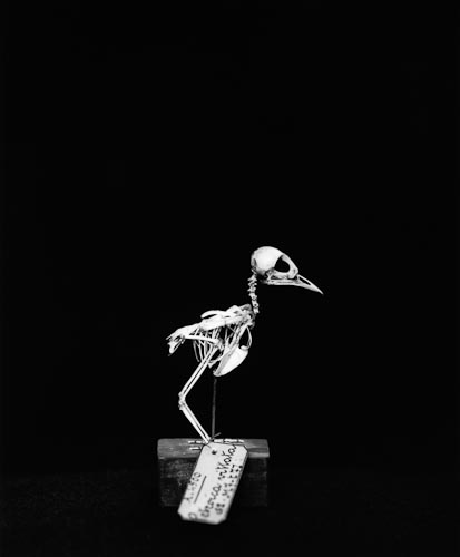 Portrait of a Young Bird, 1997